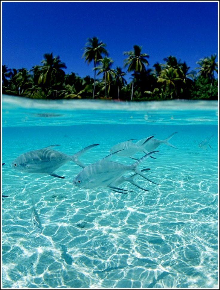 Isla La Tortuga: La forma de la isla es similar a un elipse. Posee junto con los cayos adyacentes aproximadamente 156,60 km² (15.660 héctareas) de extensión, lo que la convierte en la segunda en cuanto a tamaño de Venezuela, después de Margarita