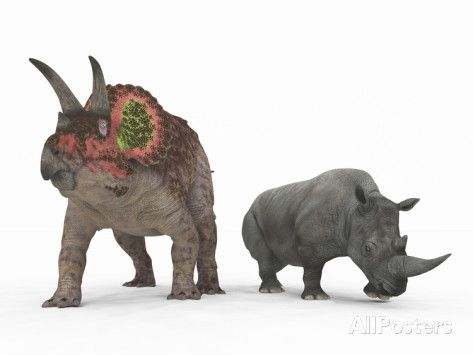 An Adult Triceratops Compared to a Modern Adult White Rhinoceros AllPosters.no