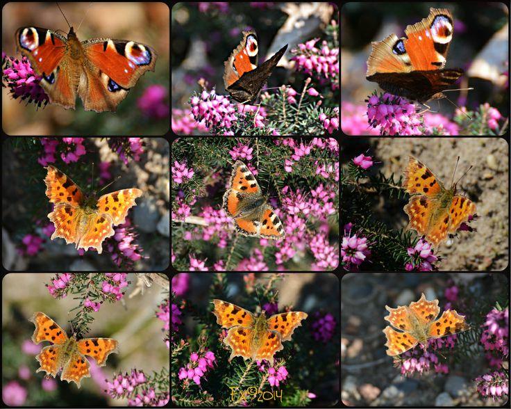 the first Butterflies 2014