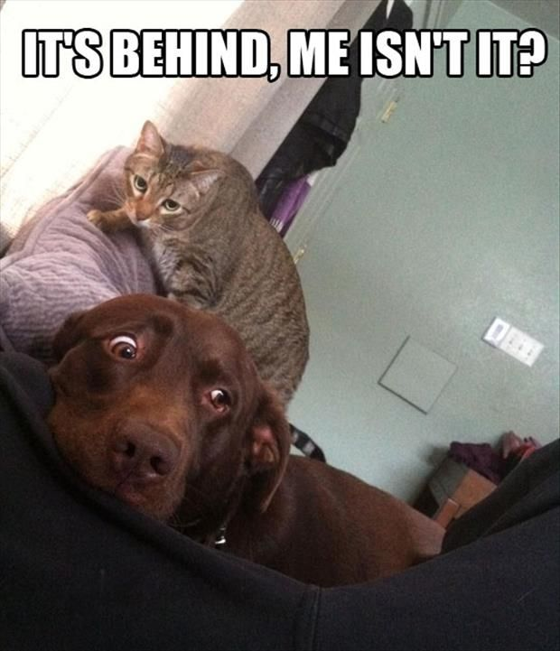 Attack Of The Funny Animals – 50 Pics Love it!  If the dog was black it would be Whisky,