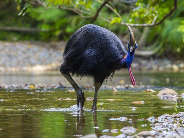 Why Fly? Flightless Bird Mystery Solved, Say Evolutionary Scientists | National Geographic
