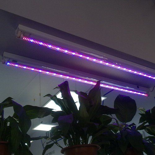 This item is standard 4ft T8 LED tube for plant growing. 240 red LED and 48 blue LED are included. It only emits light with wavelength which is helpful for plant growing. Therefore, 15W LED grow light tube can replace over 80W fluorescent tube or HPS lamp. Much less heat. It replaces T8 fluorescent tube directly. Please remove ballast when you install LED tube.