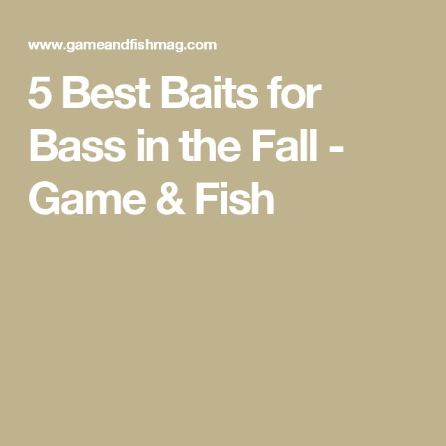 5 Best Baits for Bass in the Fall - Game & Fish