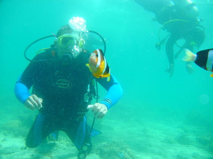Diving at Bunaken, North Sulawesi....