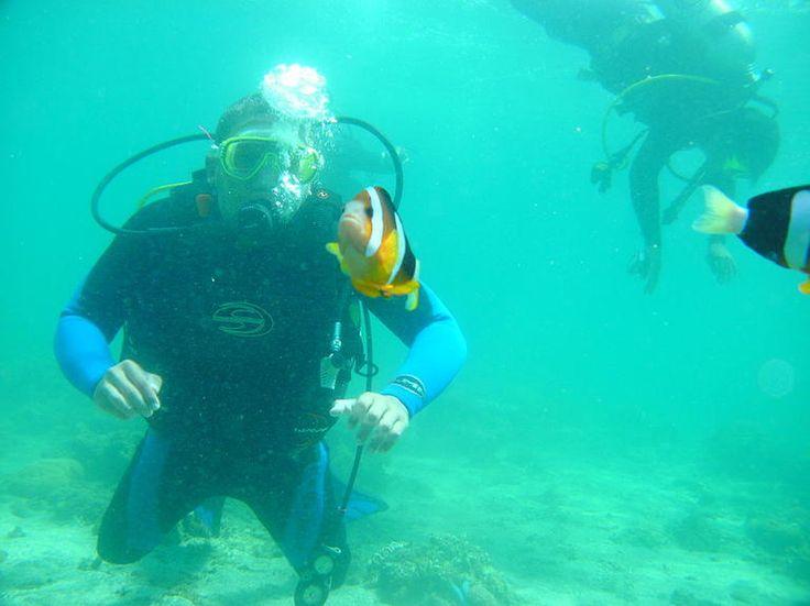 Diving at Bunaken, North Sulawesi....