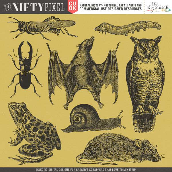 CU BRUSH & STAMPS | Natural History Nocturnal Part 1 Oh how I love a 'nifty' lil brush set and this one is a collection of creepy crawlies and nocturnal creatures from our Natural History series. Perfect for creating those halloween products or science related projects.  DOWNLOAD INCLUDES:  8X Brush Tips (.abr file) 8X Digital Stamps/Textures (.png) All products are saved at 300ppi for optimum printing quality.