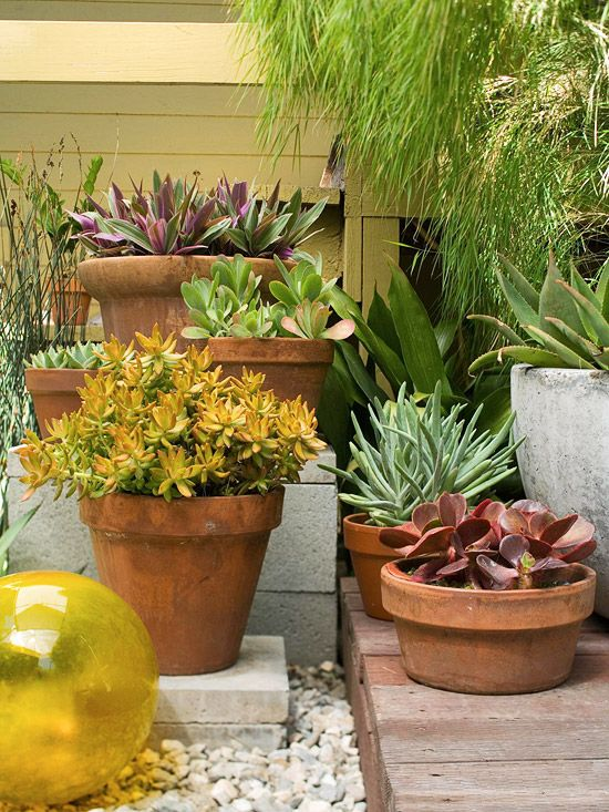 The potted succulents are drought-tolerant and need to be watered only once a month.  Great if you are away on holiday.