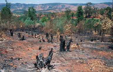 Slash and burn agriculture—also known as swidden or shifting agriculture—is a traditional method of tending domesticated crops that involves the rotation of several plots of land in a planting cycle. Is it really as bad as they say?