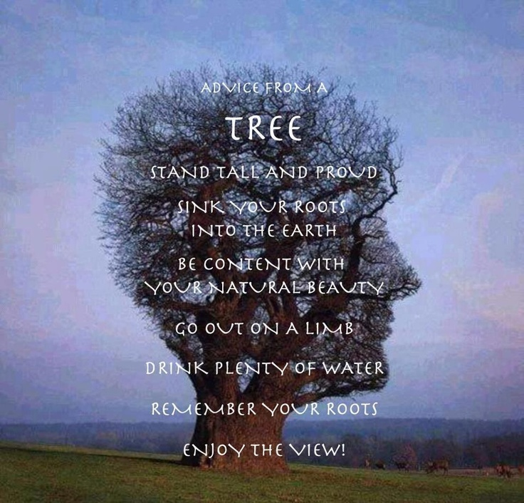 ....stand tall....enjoy the view....: Album Covers, Trees Art, Pinkfloyd, Pink Floyd, Amazing Trees, Trees Faces, Half Life, Trees Head, Head Trees