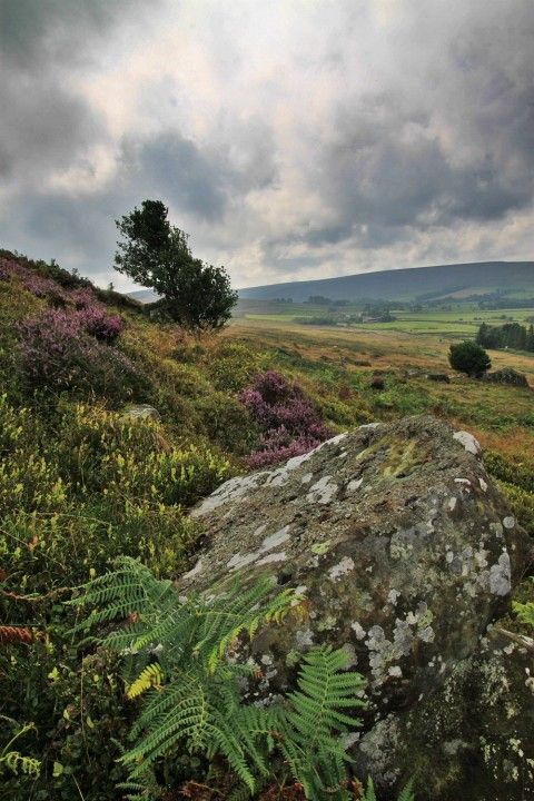 North York Moors National Park | Photographs | North Yorkshire Moors - Glenn Kilpatrick