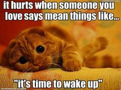 Funny cat doesn't want to wake up Why do cat - Catsincare.com!