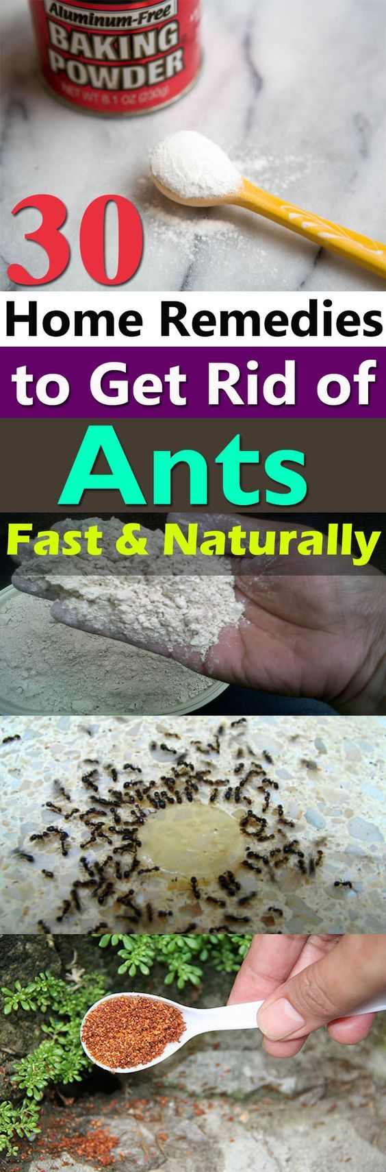 New  Natural Home Remedies To Get Rid of Ants From Home u Garden