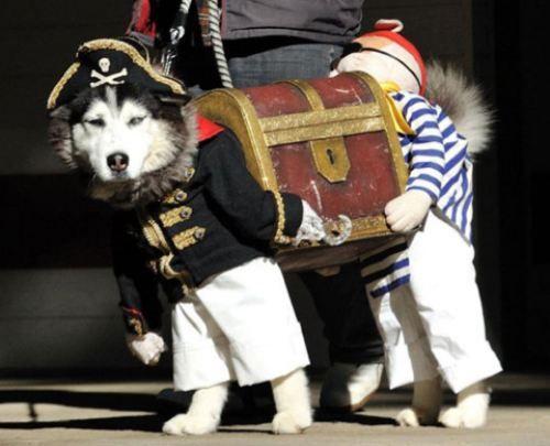 Halloween!: Halloweencostumes, Dogcostumes, Funny Dogs, Dogs Costumes, Dog Costumes, Dogs Halloween Costumes, Pirates Costumes, Animal, Pets Costumes