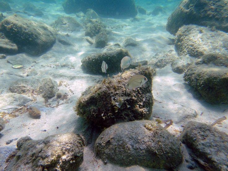 Σπάρτη: Ενημερωτική εκστρατεία για το θαλάσσιο περιβάλλον, τη ναυτιλία και τις επιστήμες