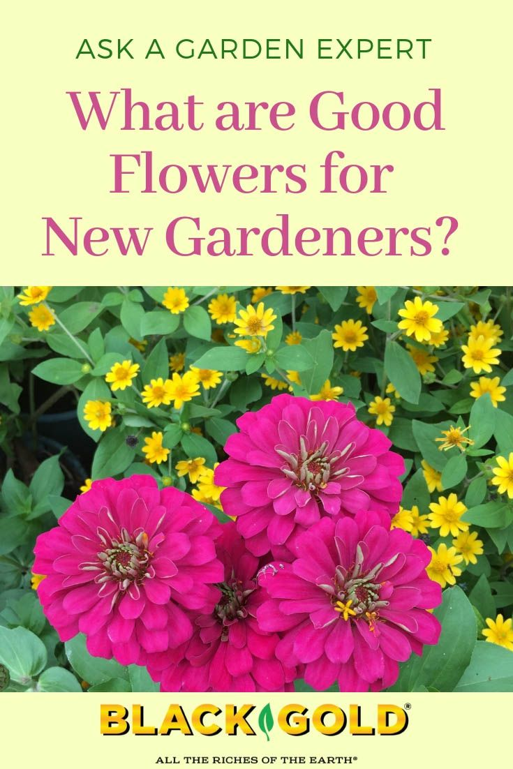 Easy Flowers For New Gardeners With Images Flowers Amazing