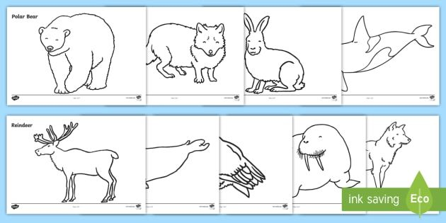Arctic Animals Colouring Sheets Arctic Winter Xmas Colouring Fine Motor Skills Post Animal Coloring Pages Coloring Pages Winter Christmas Music Coloring