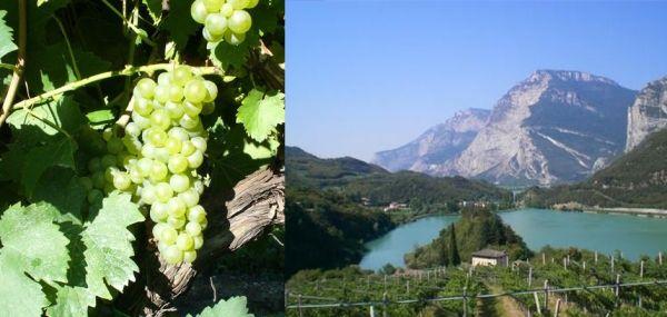 Un vino in equilibrio: il Vino Santo Trentino delle Aziende Gino Pedrotti e Francesco Poli - Vino - World Wine Passion