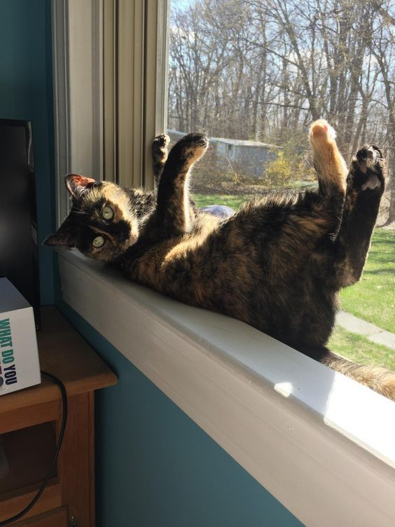 Pin By Annette Moore On Cats In Windows Cats Cats Kittens Funny