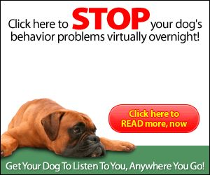 Embarrassed by your dog's behavior in public?  Does your dog choose which commands he'll obey?