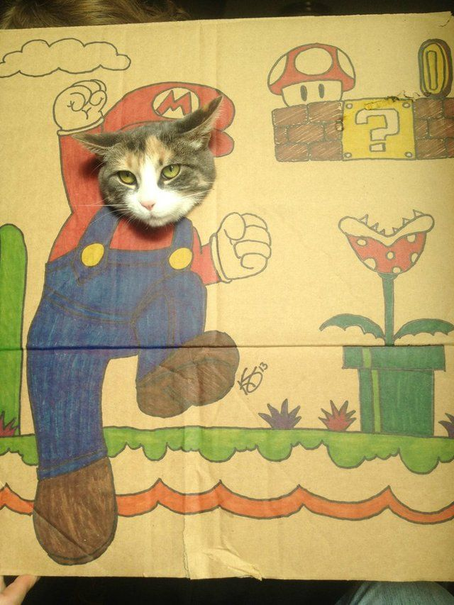Cats + cardboard costumes = win