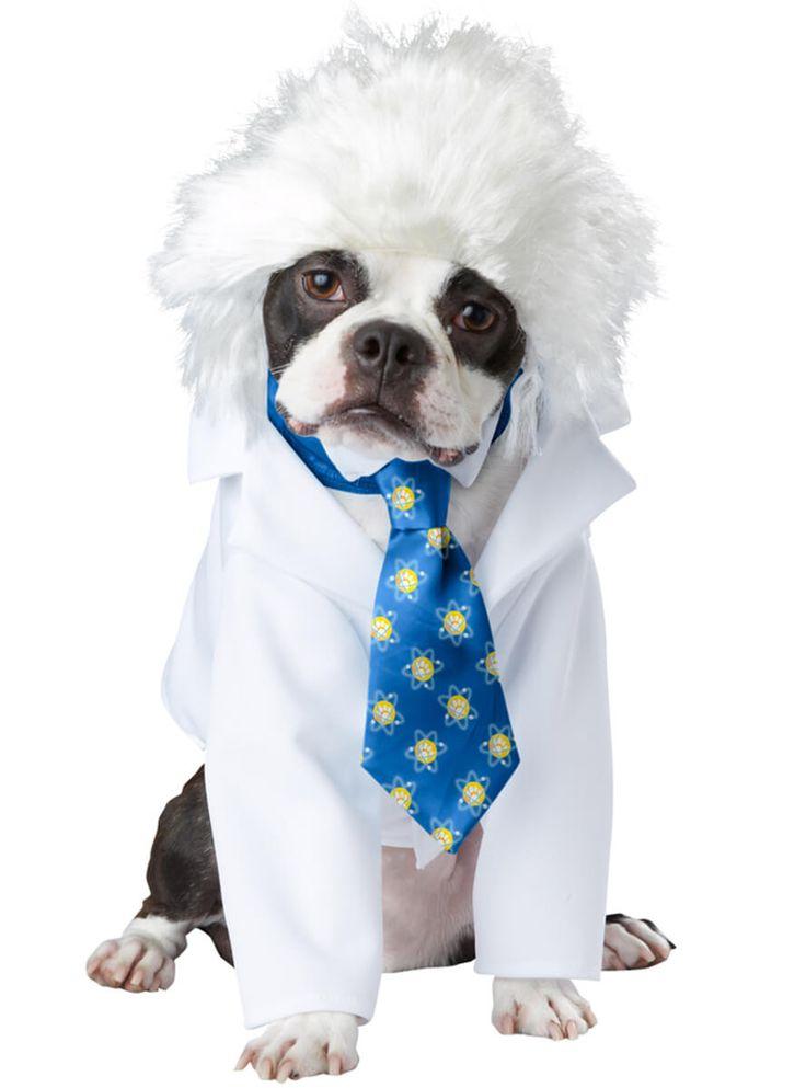 Disfraz de científico Einstein para perro | Comprar