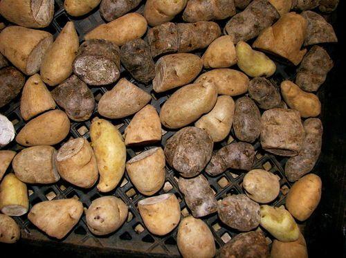 tips for growing potatoes: Gardens Outside, Gardens Ideas, Edible Gardens, Gardens Potatoes, Gardens Veggies, Apples Gardens, Gardens Outdoor, Gardens Homesteads, Gardens Growing