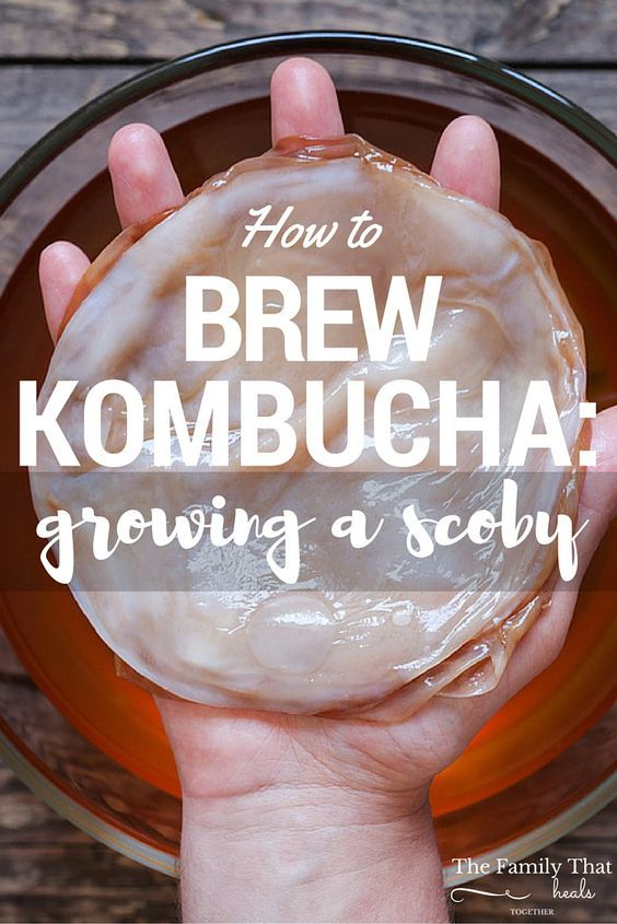 How to Brew Kombucha: Growing a Scoby   The Family That Heals Together
