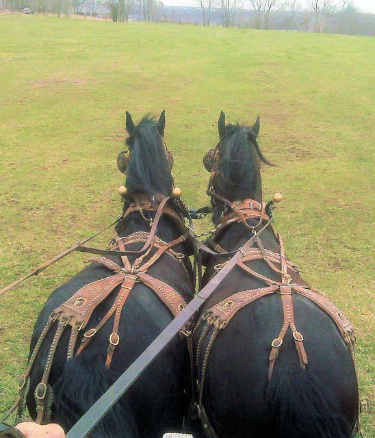 046446af7078b6877169c9fc896eae58 buggies faithful 280 best heavy duty and harness images on pinterest draft horses
