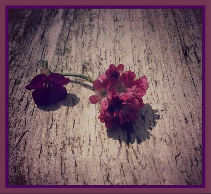 Flowers in my garden ♡