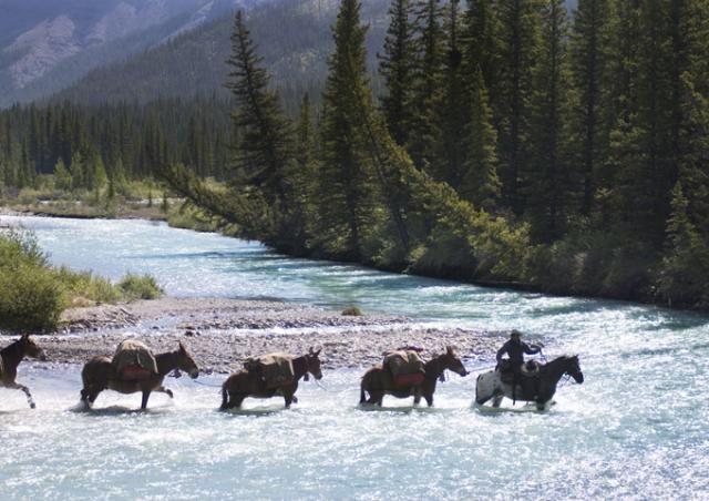 Traversée de Red Deer River, Banff National Park.