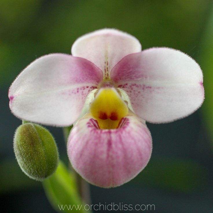 Orchid Fun Facts Check Out These Amazing Fact About Orchids Orchid Care Orchids Blooming Orchid