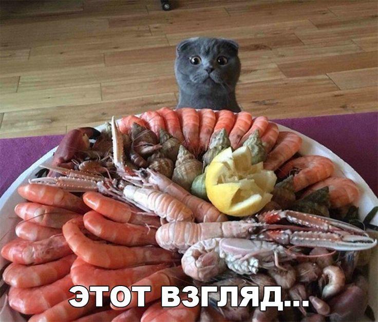 Забавные картинки с надписью до слез (12 фото)  https://zelenodolsk.online/zabavnye-kartinki-s-nadpisyu-do-slez-12-foto/