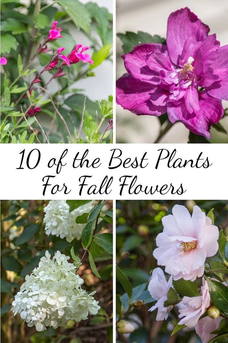 10 Of The Best Plants For Fall Flowers