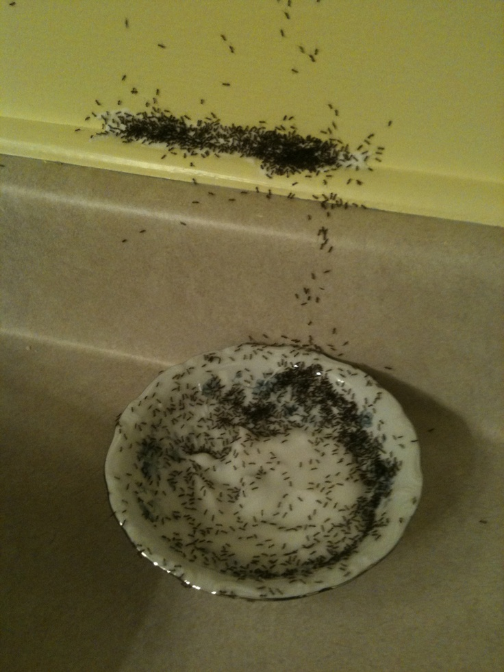 Confectioners sugar and boric acid kills ants. They take it back to the nest and voila no ants.