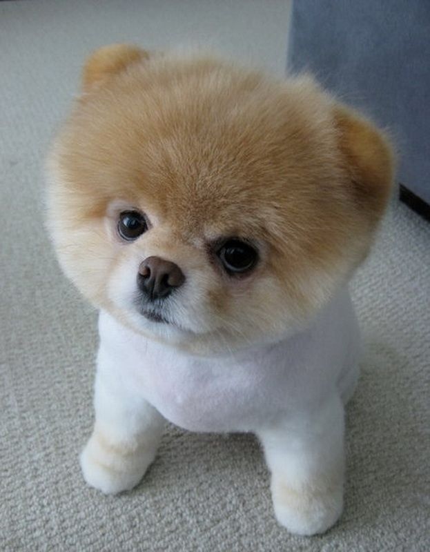 Boo, looks like he could be my baby, Bear`s son!