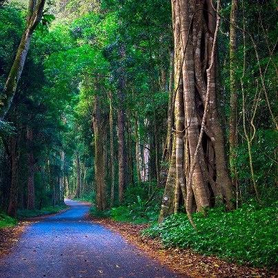 Lamington National Park  - Queensland - Australia
