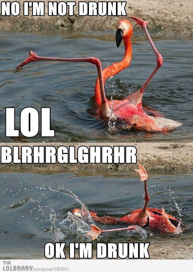 Drunk flamingo makes me giggle