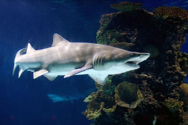 Where Do The Most Shark Attacks Occur? And How Often?