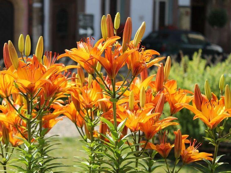 11 lényeges tudnivaló ahhoz, hogy növényeink minél többször boruljanak virágba, és a virágzás a lehető legtovább tartson!