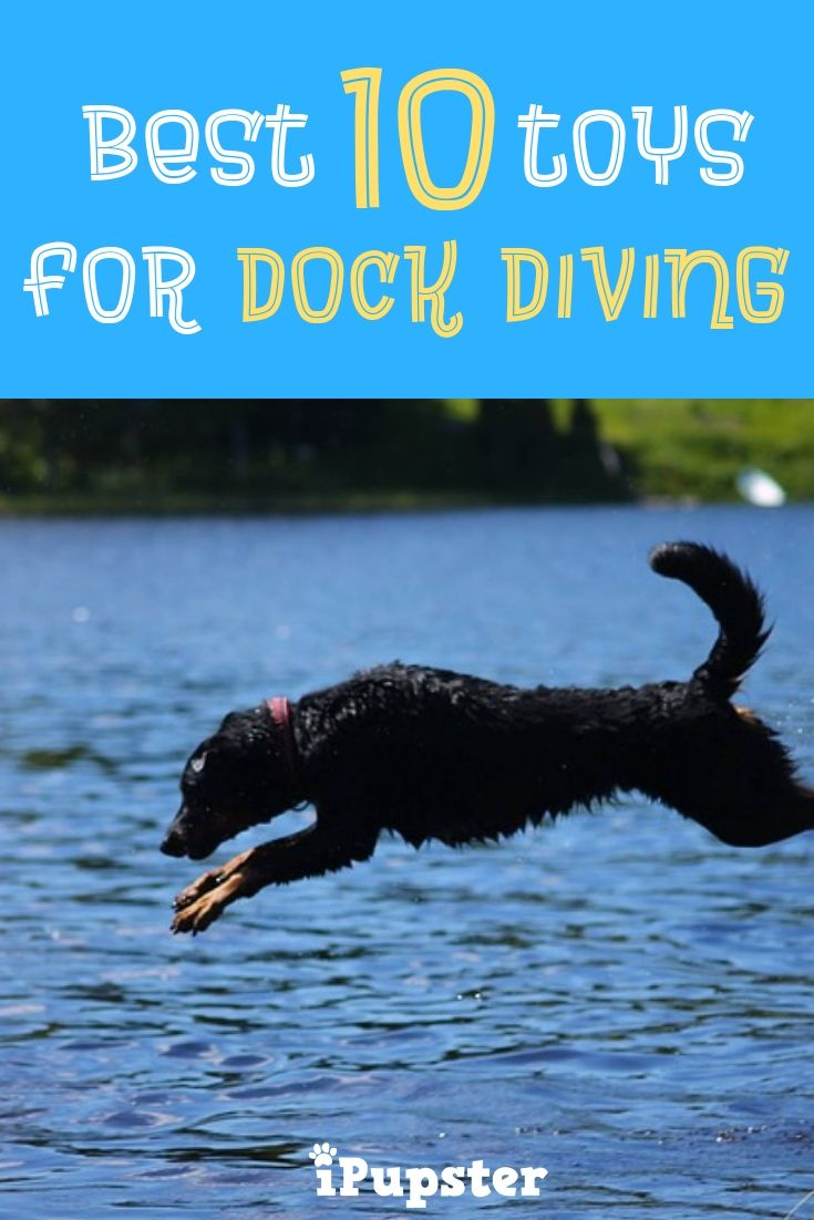 The Best Dock Diving Toys In 2019 Jumping Dog Dog Toys Puppy