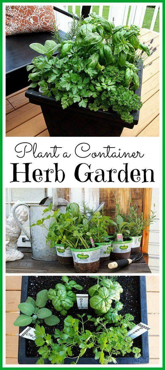 Tips for planting a container herb garden gardens patio for Container herb garden