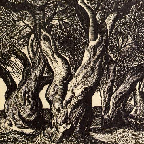 Olive tree trunks, A. Tassos, 1938, woodcut