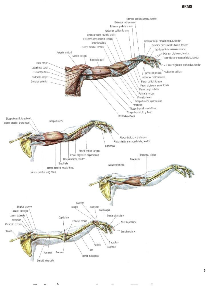 Strength Training Anatomy 2nd Edition Strength Training