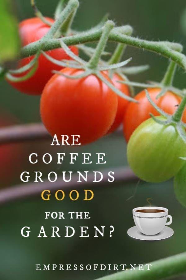 04693226abd772a64b04b511d7723b9e - Coffee Grounds Good For Vegetable Gardens
