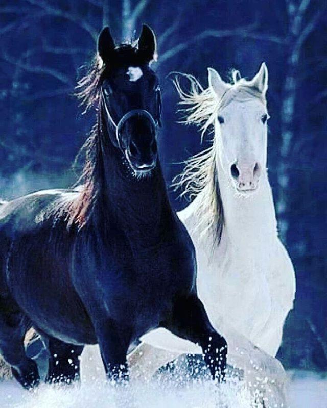 Pinterest M. Fatih ❤️ ☕