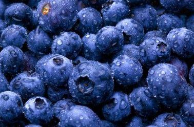 Bleuet fruit, l'antioxydant par excellence