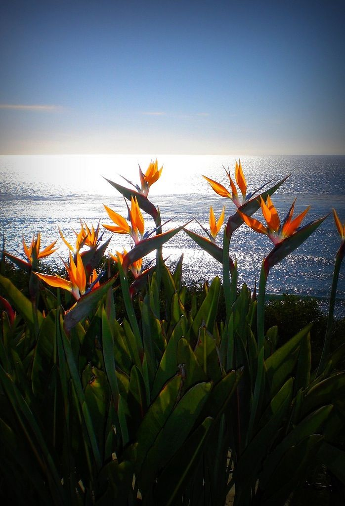 """""""Birds of paradise flowers in brazil!"""" Wow, the flowers are so pretty and the view is too."""