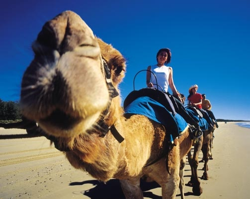 Things to do on the sunshine coast  Ride a camel to the beach #airnzsunshine
