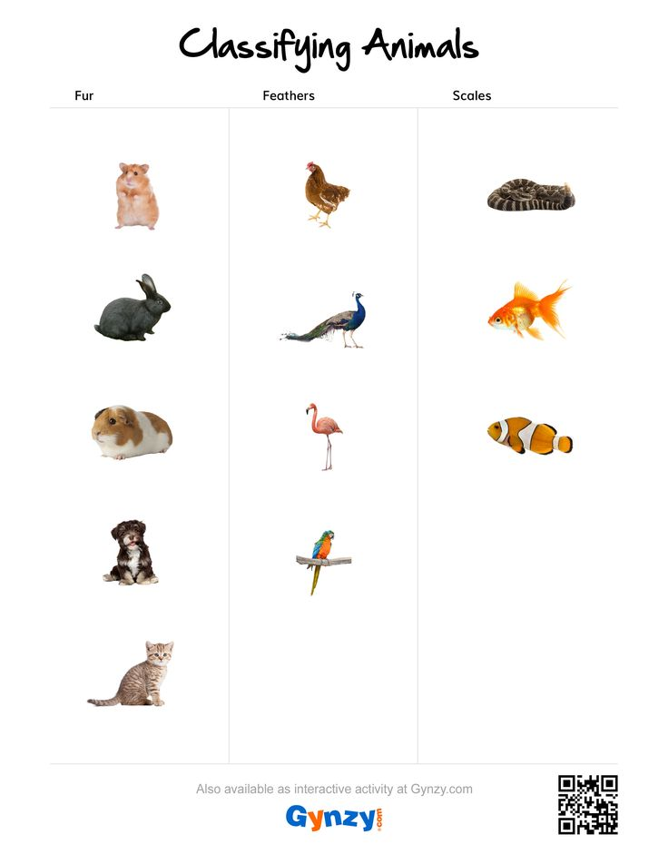 16 best Classifying Animals images on Pinterest | Animal ...