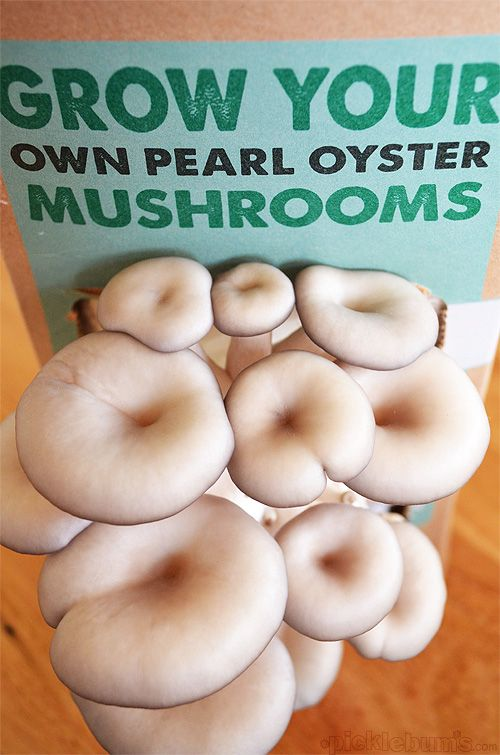 Kid Friendly Food Gardening - grow your own mushrooms kit - I can not believe how easy it was!